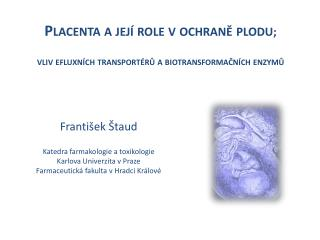 Placenta a její role vochraně plodu ;  vliv efluxních transportérů a biotransformačních enzymů