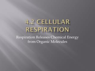 4.2 Cellular Respiration