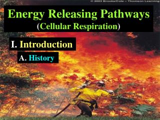 Energy Releasing Pathways  ( Cellular Respiration )