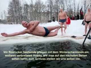 Und das sind wir Seehunde selbst – mehr dazu unter : rostocker-seehunde.de