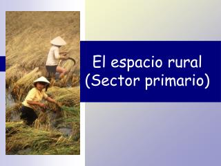 El espacio rural (Sector primario)