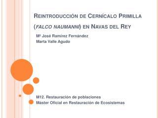 Reintroducción de Cernícalo Primilla ( falco  naumanni ) en Navas del Rey