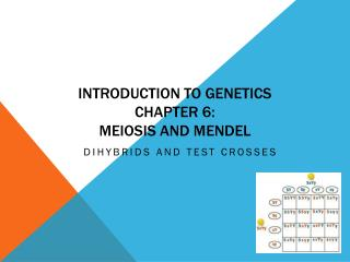 Introduction to Genetics Chapter 6:   Meiosis and Mendel