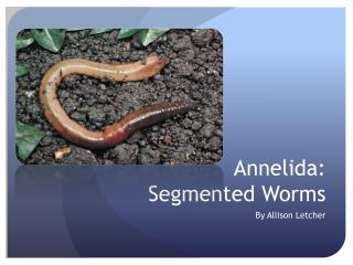 Annelida:  Segmented  W orms