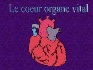 Le coeur organe vital