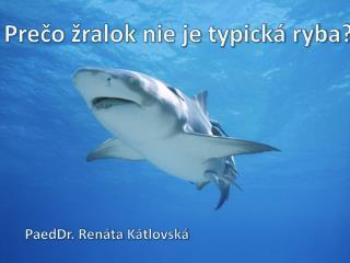 Prečo žralok nie je typická ryba?