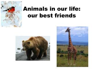 Animals in our life : our best friends