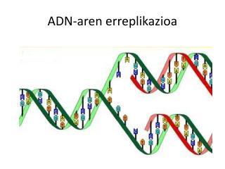 ADN-aren erreplikazioa