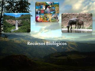 Recursos Biol�gicos