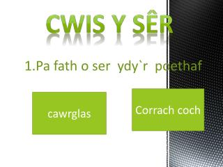 Cwis  y  s�r