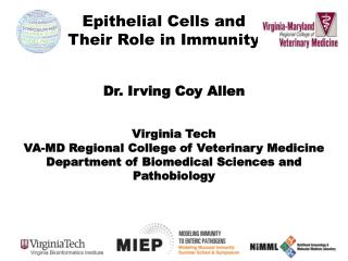 Epithelial  Cells  and  Their Role  in  Immunity