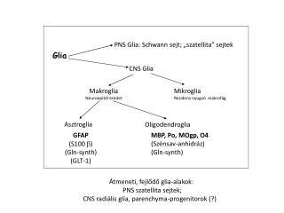 CNS Glia