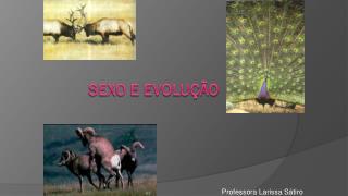 SEXO E EVOLUÇÃO