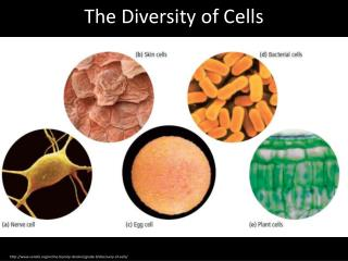 The Diversity of Cells