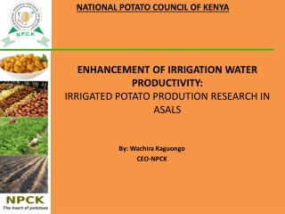 ENHANCEMENT OF IRRIGATION WATER PRODUCTIVITY:  IRRIGATED POTATO PRODUTION RESEARCH IN ASALS