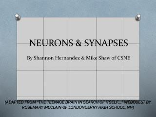 NEURONS  &  SYNAPSES By Shannon Hernandez & Mike Shaw of CSNE