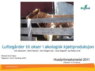 Luftegårder til okser i økologisk kjøttproduksjon