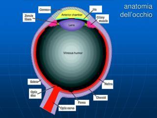 Anatomia dell occhio