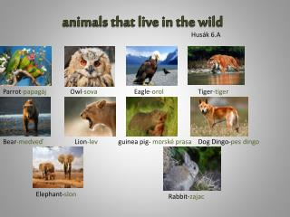 animals that live in the wild