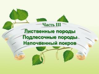 Лиственные породы Подлесочные породы Напочвенный покров