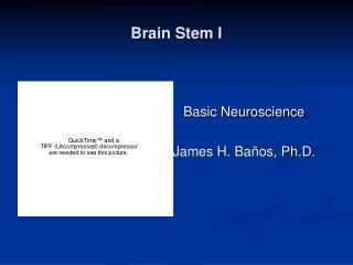 Brain Stem I