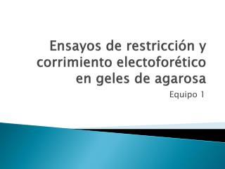 Ensayos de restricción y corrimiento  electoforético  en geles de agarosa
