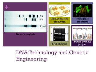 DNA  Technology and Genetic Engineering