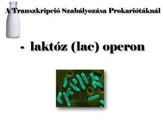 A Transzkripció  S zabályozása  P rokariótáknál -  laktóz (lac) operon