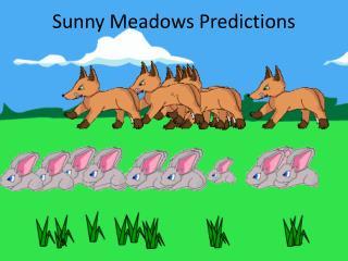 Sunny Meadows Predictions
