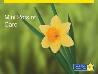 Mini Pots of Care