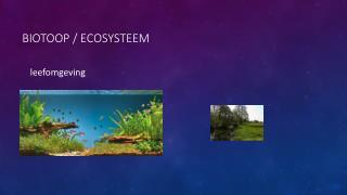 Biotoop  / ecosysteem