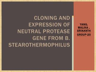 Cloning and expression of neutral protease gene from B.  Stearothermophilus