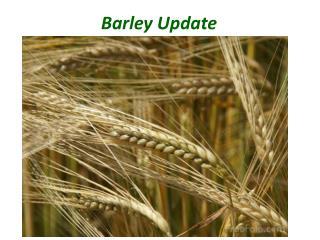 Barley  Update