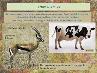 Lecture 6 Sept. 24
