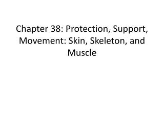 Chapter 38: Protection, Support, Movement: Skin, Skeleton, and Muscle