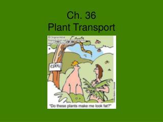Ch. 36 Plant Transport
