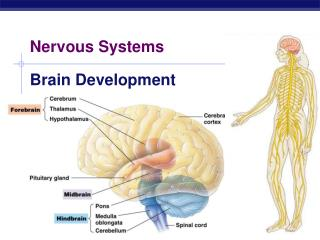 Nervous Systems