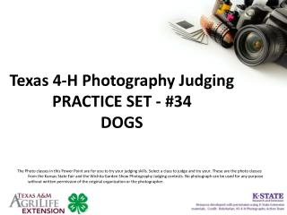 Texas 4-H Photography Judging PRACTICE SET - #34 DOGS