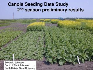 Canola Seeding Date Study  2nd season preliminary results