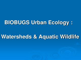 BIOBUGS Urban Ecology :    Watersheds  Aquatic Wildlife