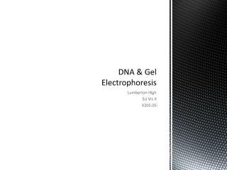 DNA & Gel Electrophoresis