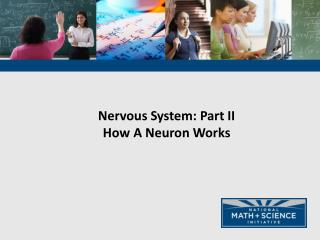 Nervous System: Part  II How A Neuron Works