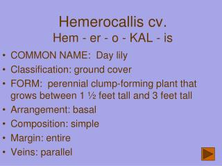 Hemerocallis  cv . Hem - er - o - KAL - is