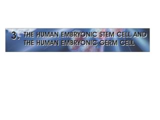 OVERVIEW 1998     - James Thomson and his colleagues: the first derivation of human ES cells