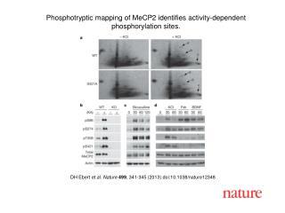 DH Ebert  et al. Nature 499 , 341-345 (2013) doi:10.1038/nature12348