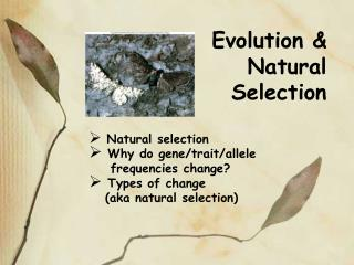 Evolution & Natural Selection