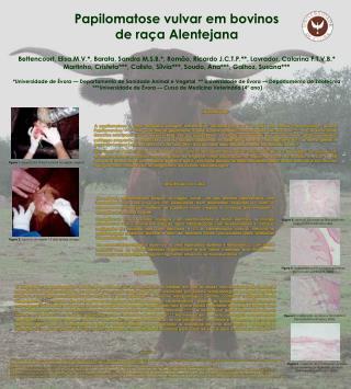 Papilomatose vulvar em bovinos de ra�a Alentejana