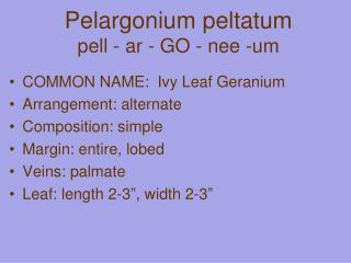Pelargonium  peltatum pell - ar - GO - nee -um