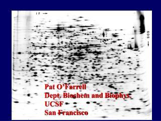 Pat O'Farrell Dept. Biochem and Biophys. UCSF San Francisco