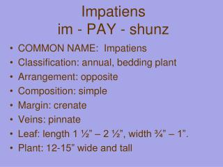 Impatiens im  - PAY -  shunz
